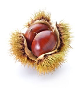 Chestnut in a haul